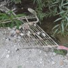 IU lamenta que en la reunión con la C.H. del Júcar no de hablara del mantenimiento y limpieza de las orillas.